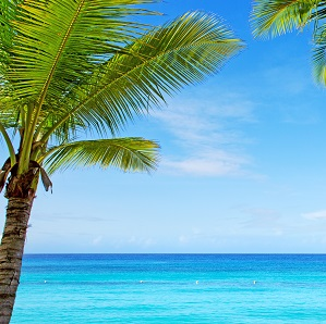 View of blue water and palm tree.